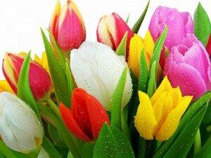 свежие цветы, цветы, живые цветы, срезать цветы, красивые цветы, букет